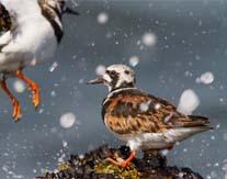 Workshop vogelfotografie IJmuiden