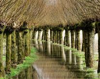 Natuurtocht Biesbosch met gids
