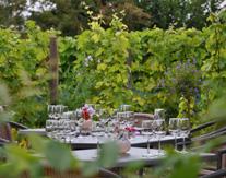 Rondleiding in de Wijngaard